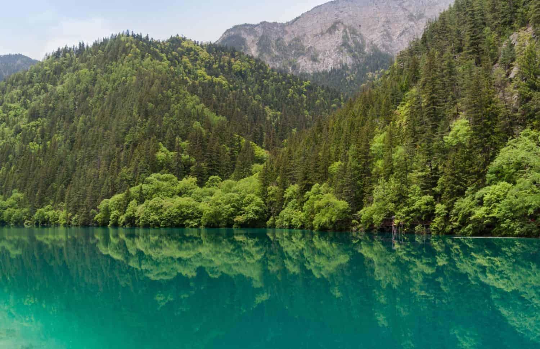 Kina Jiuzhaigou Sichuan Panda Lake