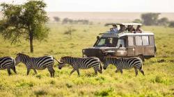Tanzania-safari-after-zebra