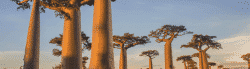 マダカスカル