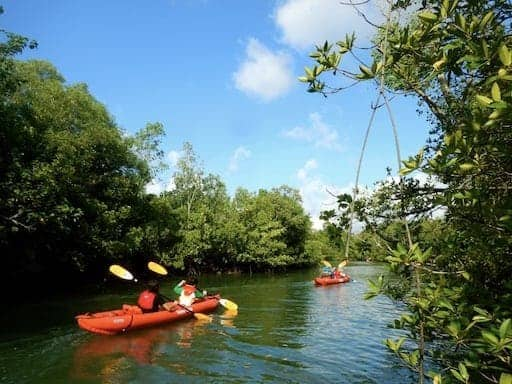 ubin-singapore-kayak excursion