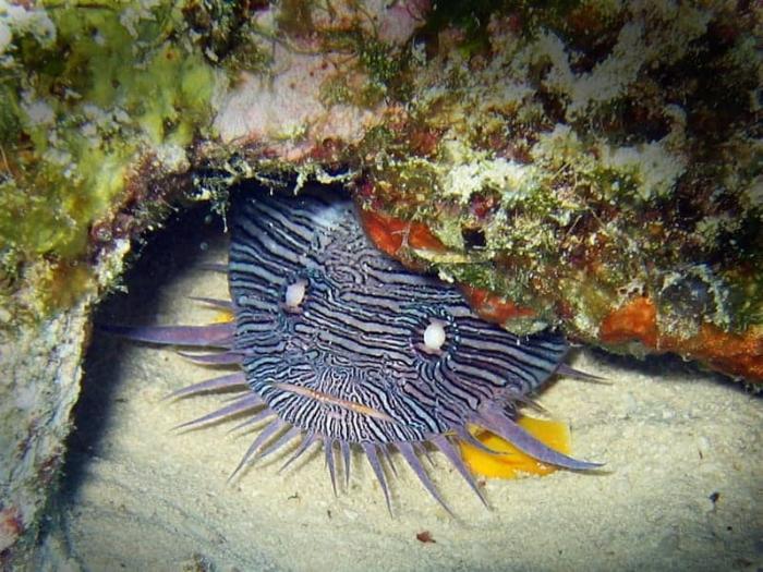 sjove fisk er ingen mangelvare på Cuzumel, snorkel er nok for at se med!