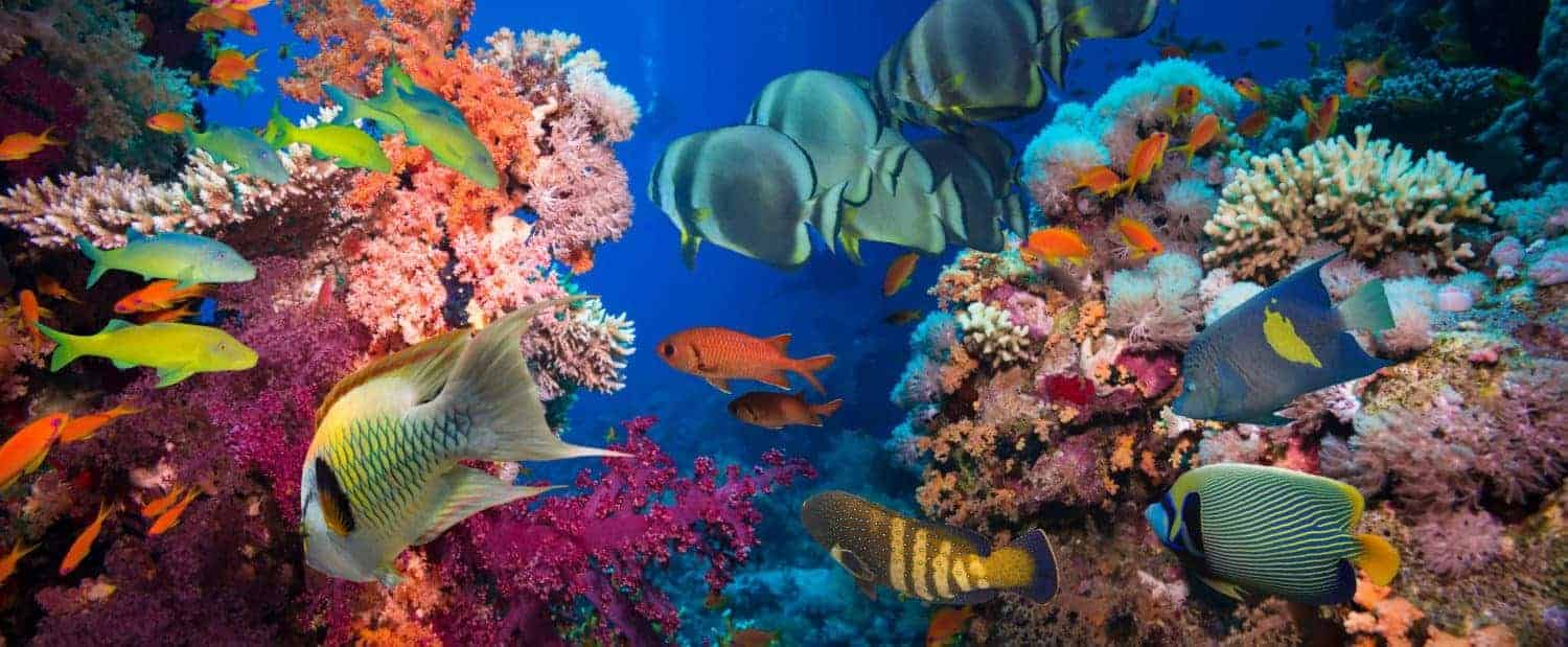 Great Barrier Reef, Tropical Fish and Coral Reef. Ecosystem, climate