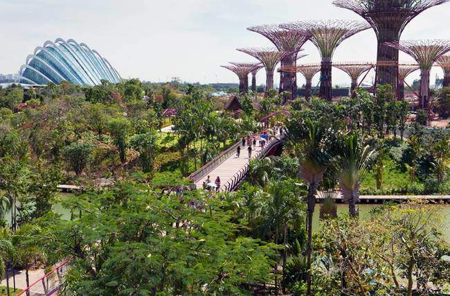 singapore-gardens-by-the-bay-supertrees