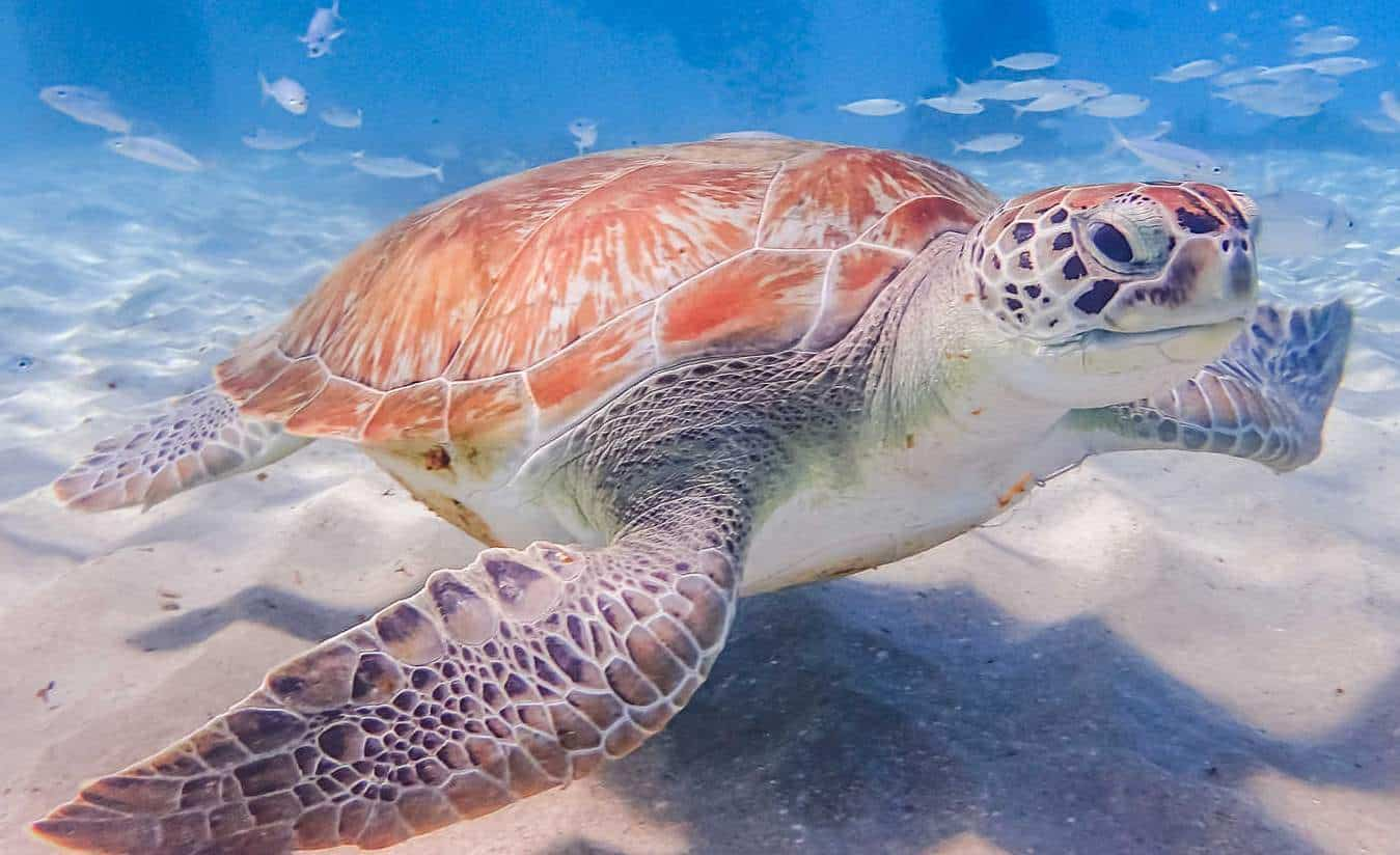 Swimming with turtles Views around Curacao a small Tropical Caribbean Island