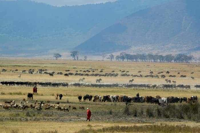 The Ngorongoro crater contains an abundance of wildlife on a very well-defined area in Tanzania