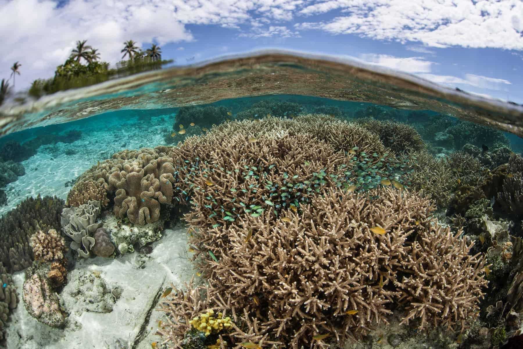Melanesia, healthy coral reef