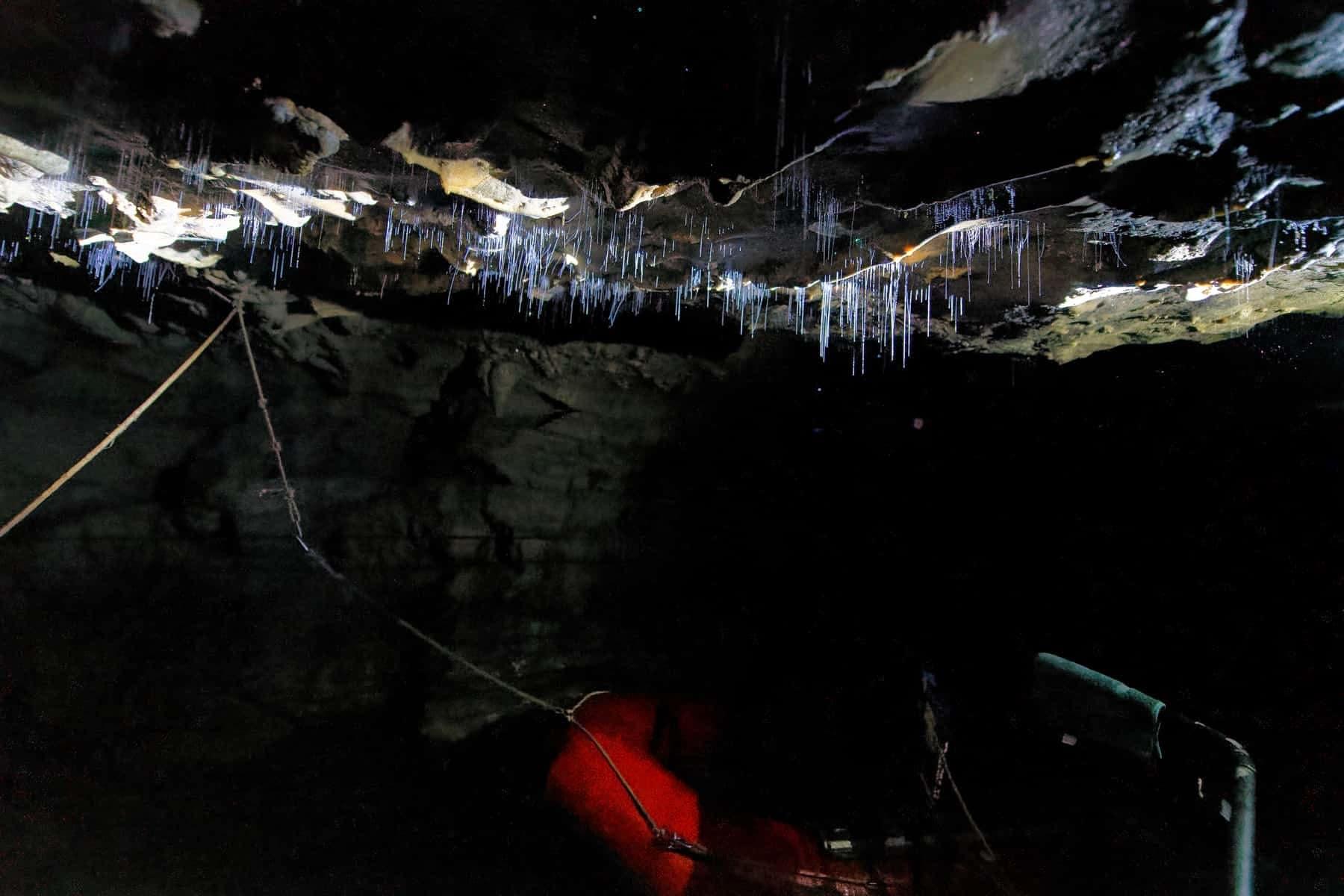 waitomo-glowworms-filaments