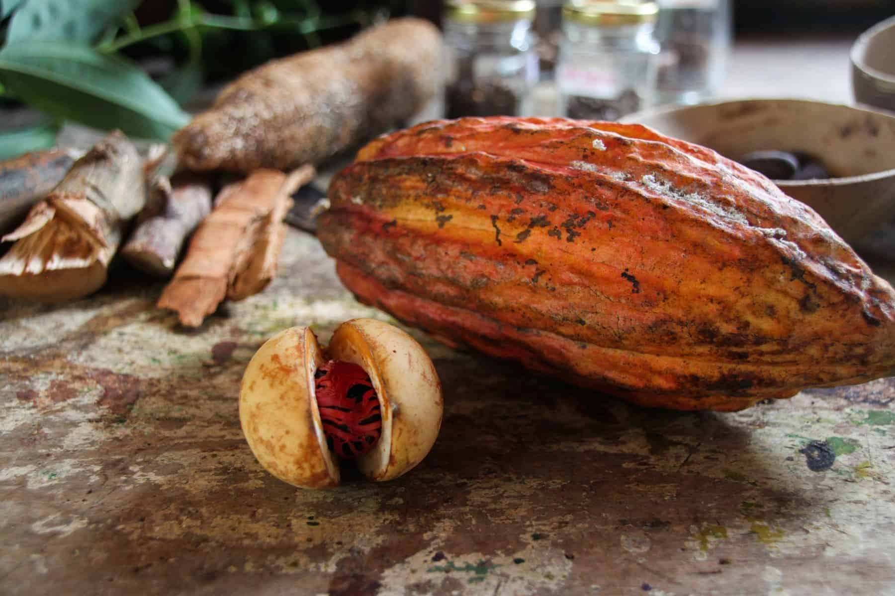 Cocoa at the carribean island of Grenada