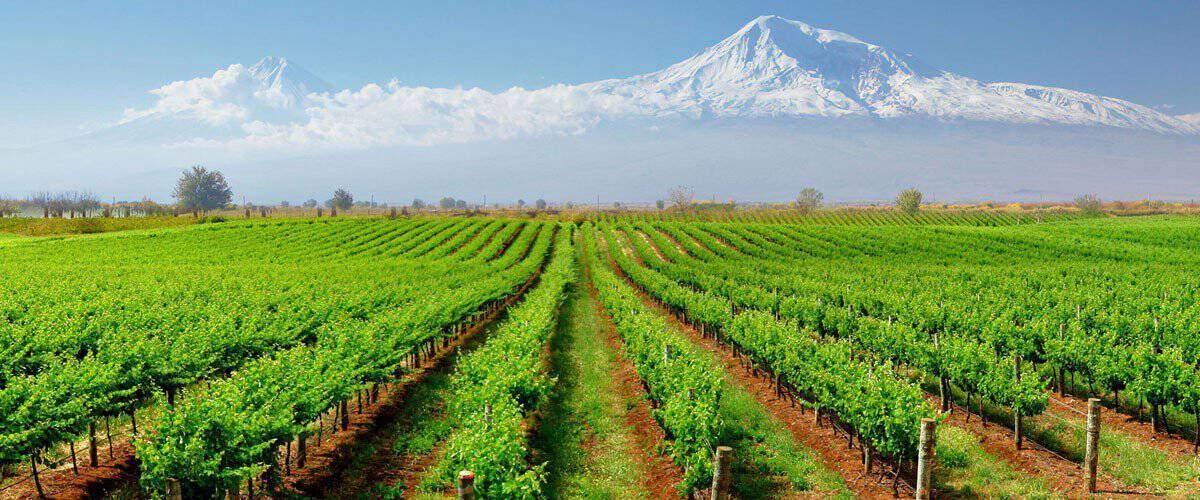 koor Armenian wine