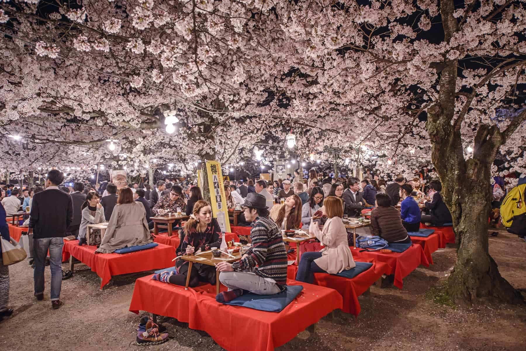 KYOTO, JAPAN People enjoy the spring season by partaking in nighttime Hanami festivals. The annual festivals coincide with the seasonal blooming of the cherry blossoms.
