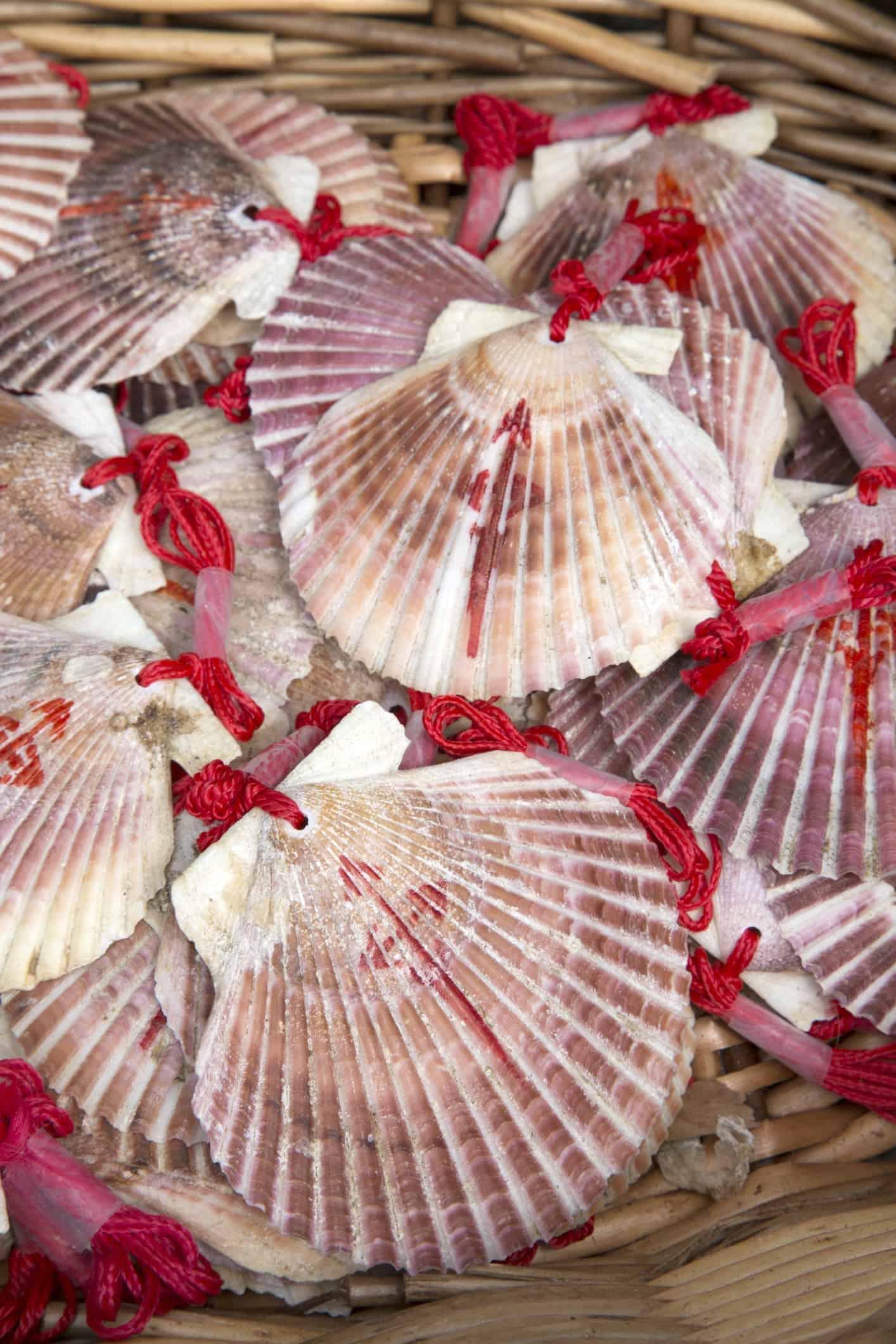 Shell Symbol of Camino de Santiago Galicia; Spain;