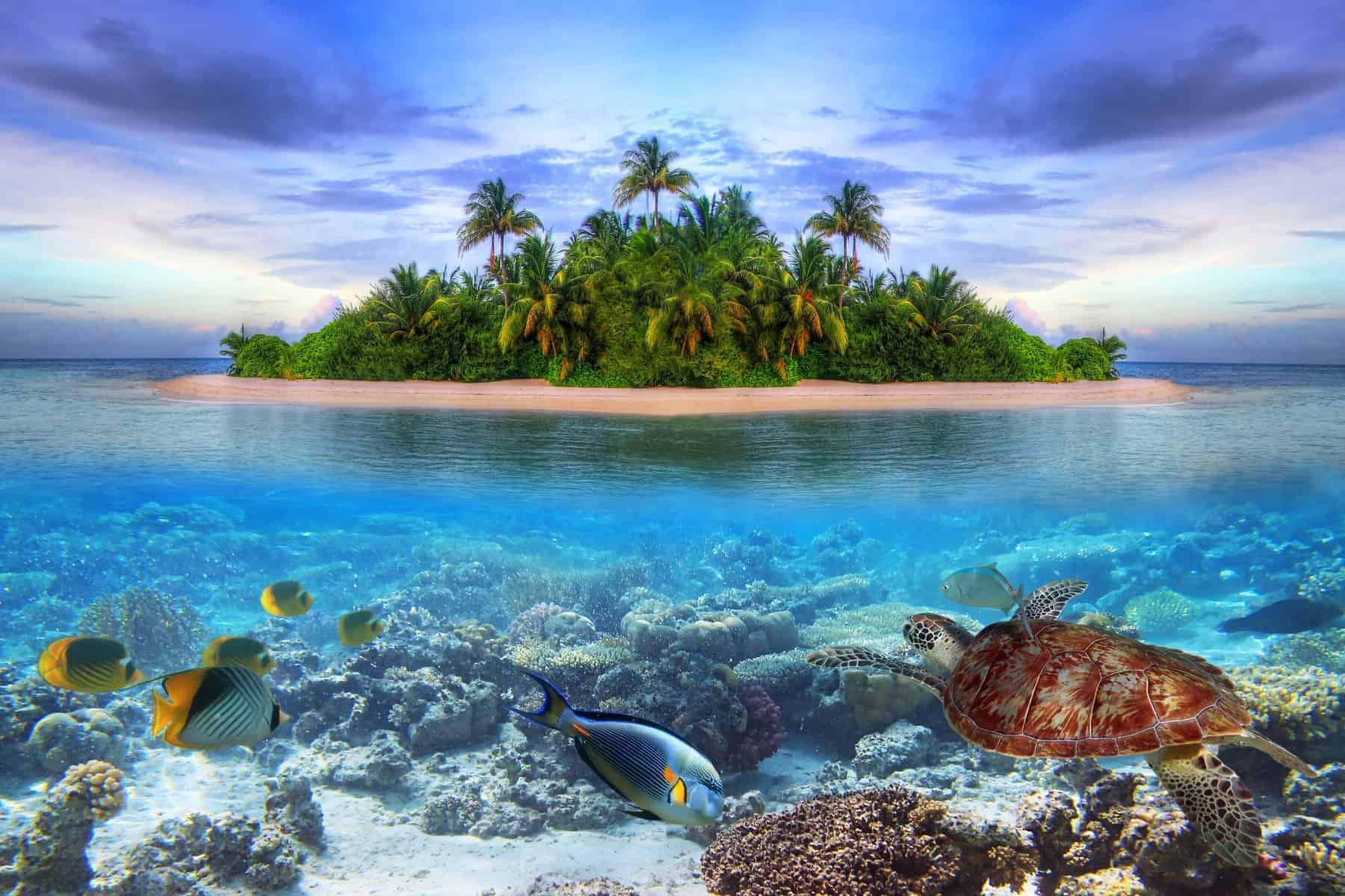 Smallest country in Asia, Maldives with amazing underwater life
