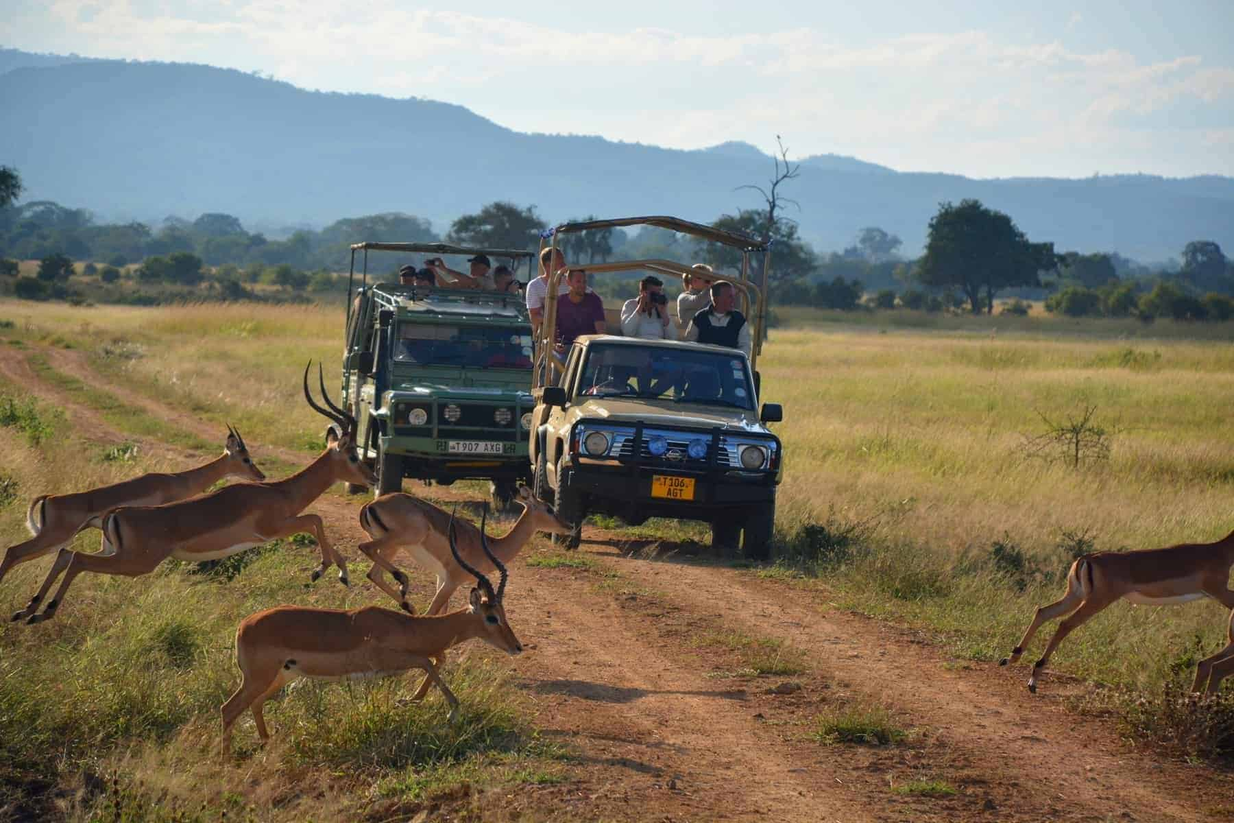 The Mikumi National Park is a national park in Mikumi, near Morogoro, Tanzania. The Mikumi is bordered to the south with the Selous Game Reserve, the two areas forming a unique ecosystem