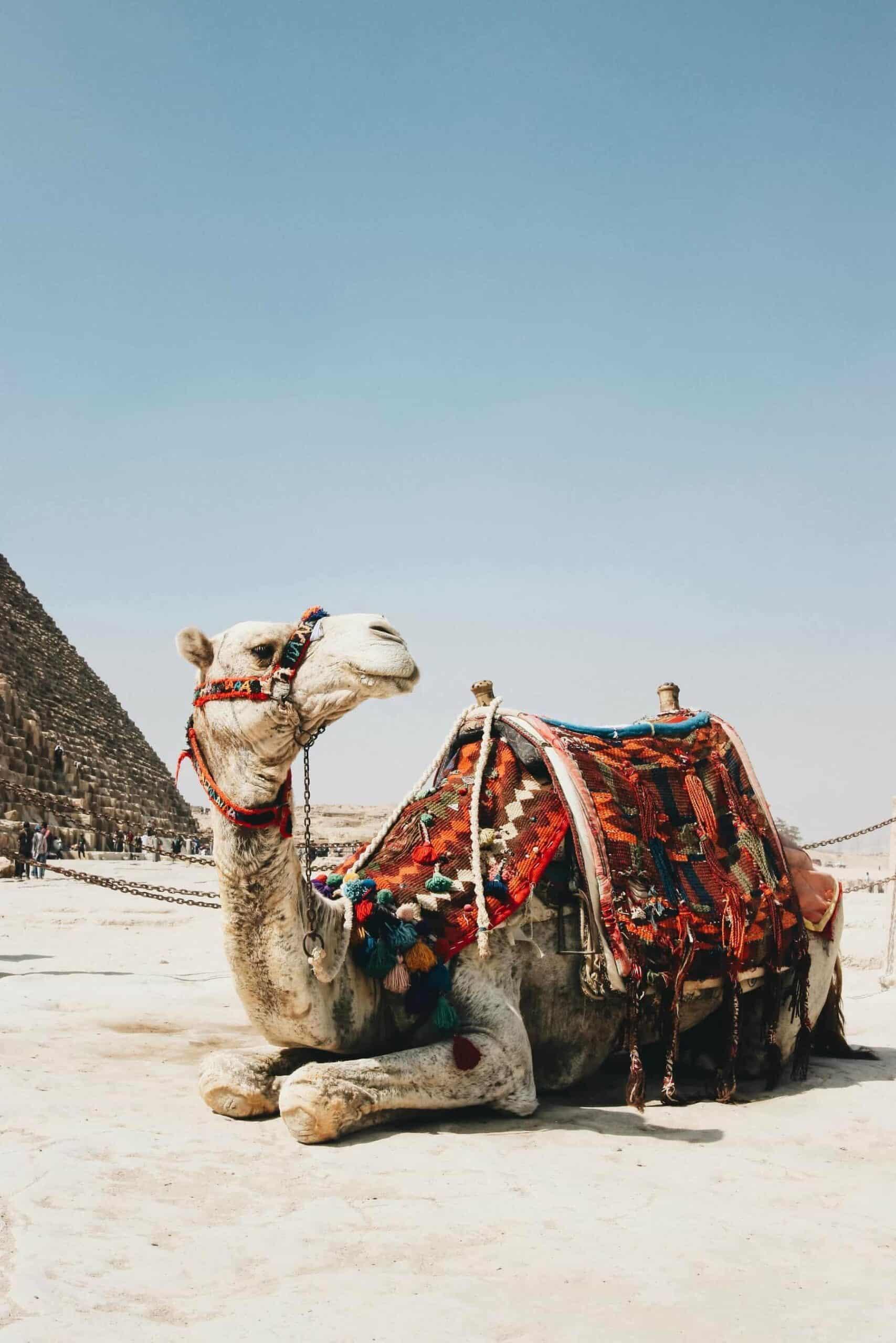 Egypt Camel ride