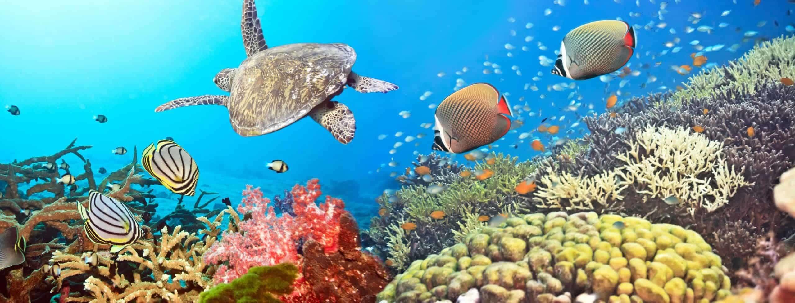 Similan islands, underwater, Thailand