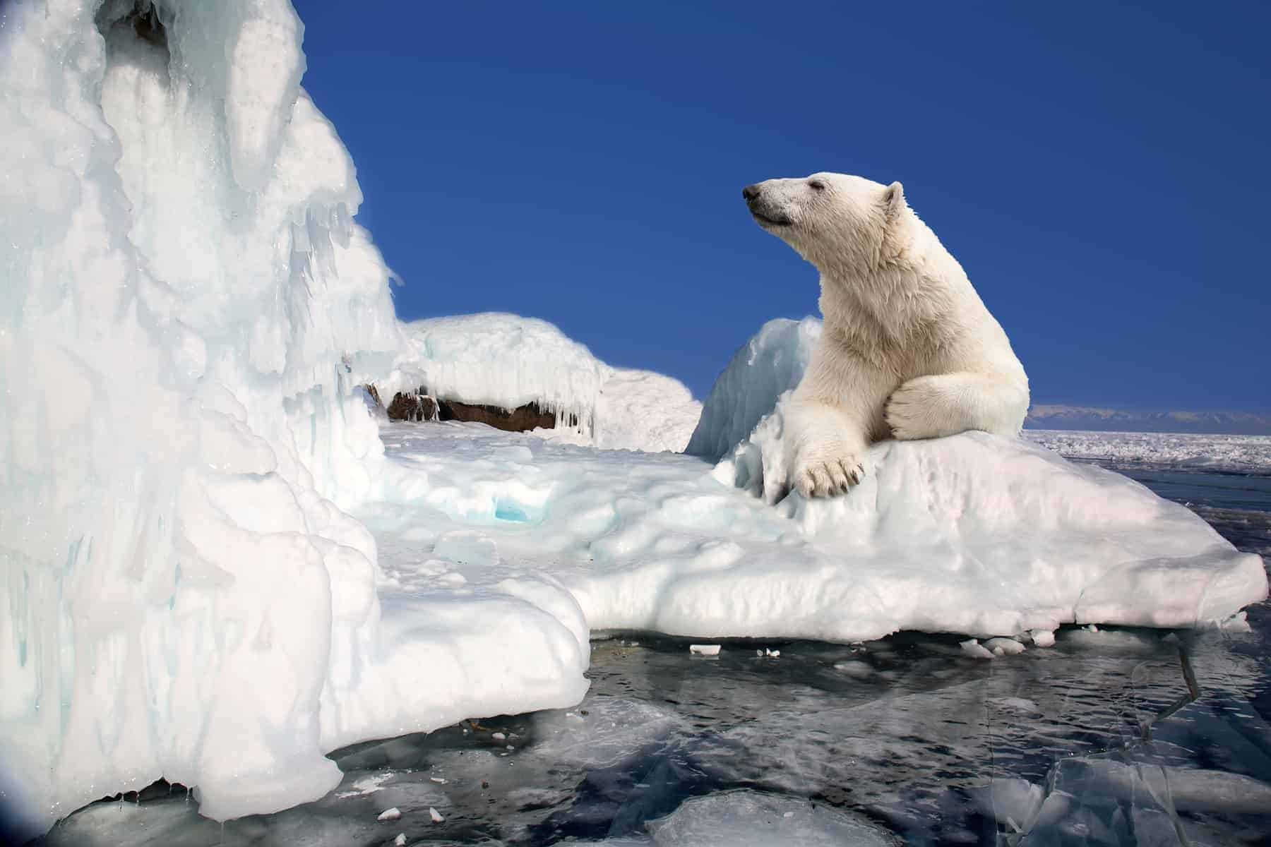 Polar bear standing on an ice block, Svalbard, Norway