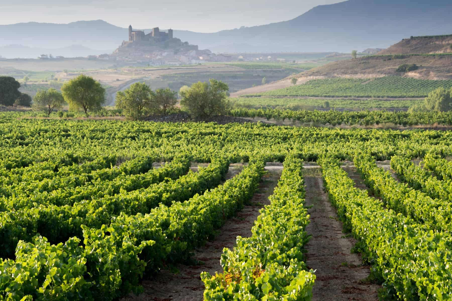 La Rioja wine region in Spain