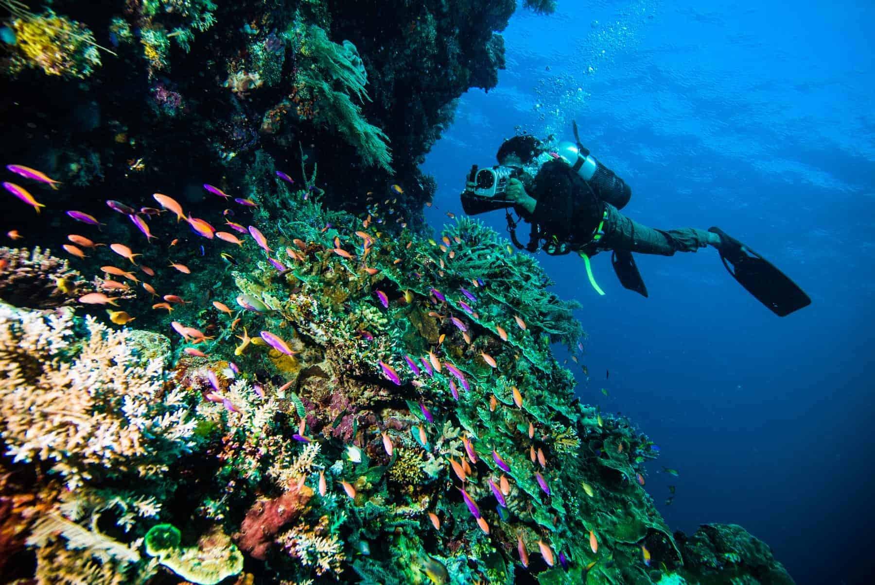 Bunaken, Diver, Indonesia